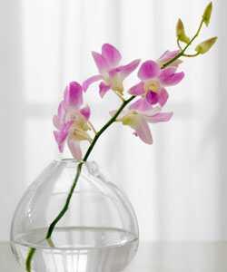 Orkidéolje: En gjennombrudd hårpleie ingrediens
