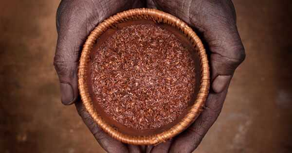 Чајот на Rooibos исплакнете за смирување на скалпот и првут