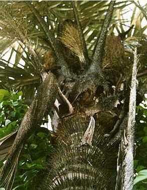 Honorer les quebradeiras de coco lhistoire de babassu