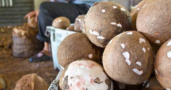 Velika debata o kokosovim uljem: Da li ima proteine?