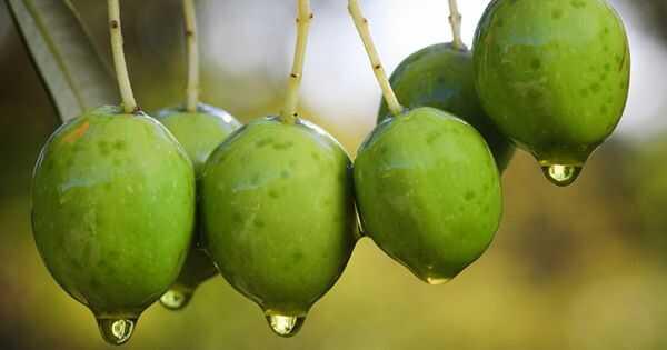 Prednosti maslinovog ulja za kosu