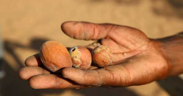 A marulaolaj előnyei