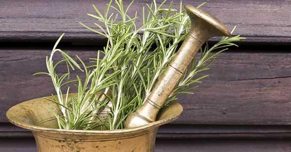 4 načina korišćenja Rosemary za rast kose
