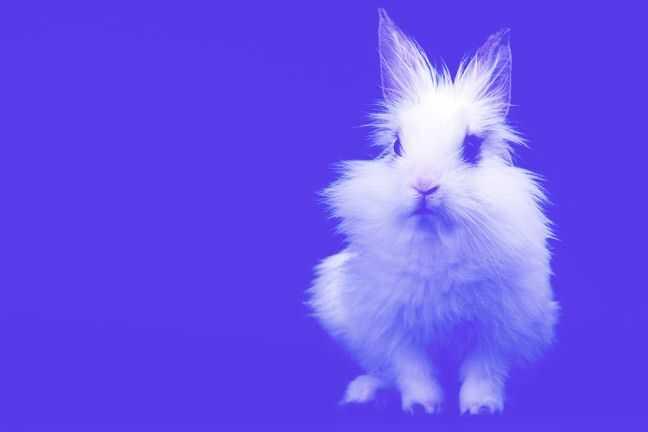 2 veľké kroky na ukončenie testovania na zvieratách v kráse